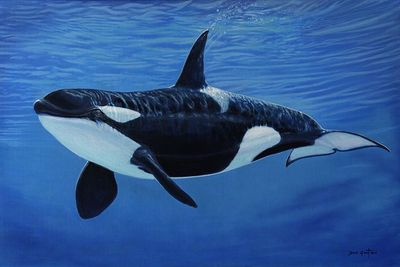 """David Grant Artist Hand-signed Gallery Wrap Canvas Giclee:""""Orca"""""""