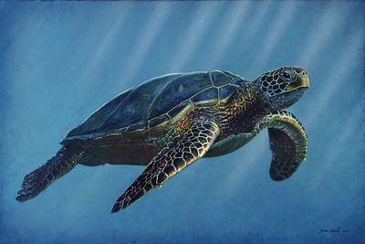 "David Grant Artist Hand-signed Gallery Wrap Canvas Giclee:""Sea Turtle"""