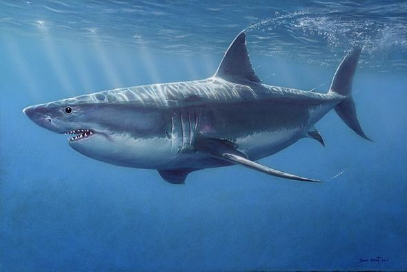 "David Grant Artist Hand-signed Gallery Wrap Canvas Giclee:""Great White Shark"""