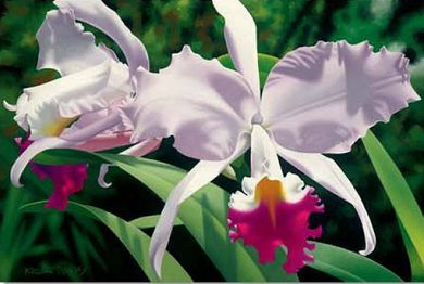 """Brian Davis Hand Signed and Number Limited Edition Giclee on Canvas: """"White and Magenta Orchids"""""""