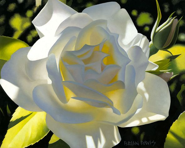 """Brian Davis Hand Signed and Numbered Limited Edition Giclee on Canvas:""""Divine White Rose"""""""