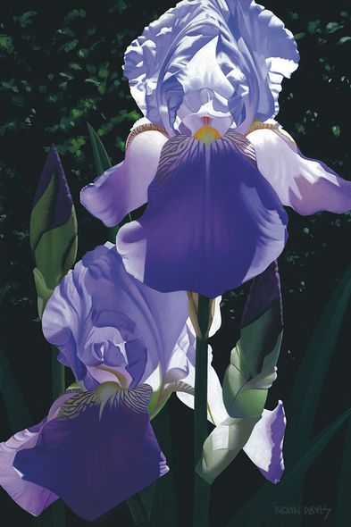 """Brian Davis Hand Signed and Numbered Limited Edition Giclee on Canvas:""""Two Blue Irises"""""""