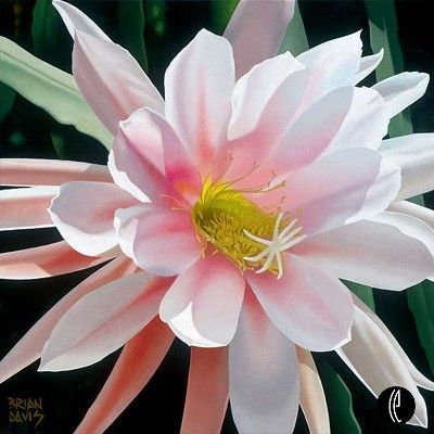"""Brian Davis Handsigned and Numbered Limited Edition Giclee on Canvas:""""Blushing Beauty"""""""