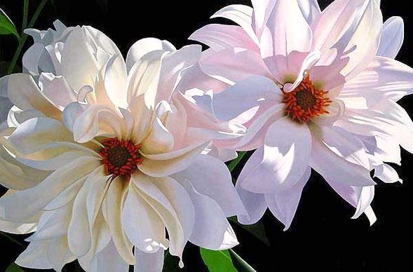 """Brian Davis Handsigned and Numbered Limited Edition Giclee on Canvas:""""Delightful Dahlias"""""""