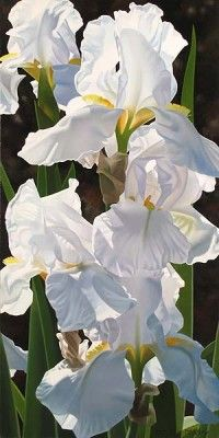 """Brian Davis Handsigned and Numbered Limited Edition Giclee on Canvas: """"Enchanting Irises"""""""