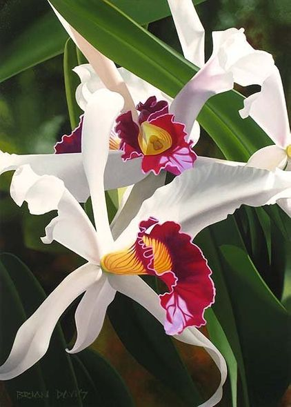 "Brian Davis Handsigned & Numbered Limited Edition Giclee on Canvas:""Captivating Cattleya"""