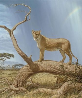 "Lee Kromschroeder Artist Signed Limited Edition Canvas Giclee:""Lioness"""