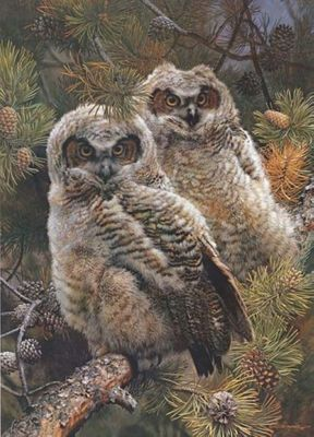 "CARL BRENDERS 19X27 Secondary Market Art: ""HIDDEN IN PINES OWL"""