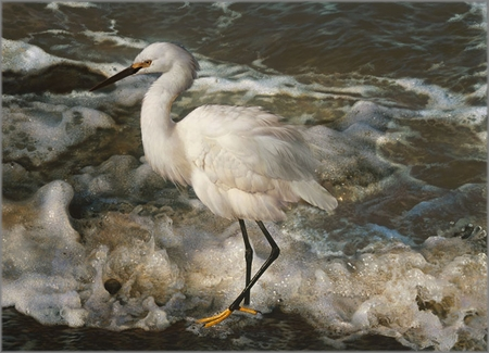 "Carl Brenders Hand Signed and Numbered Limited Edition Fine Art Print:""Island Shores - Snowy Egret """