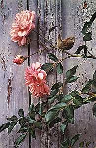 """Carl Brenders Hand Signed and Numbered Limited Edition Giclee on Canvas: """"Summer Roses - Winter Wren"""""""