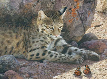 "Carl Brenders Hand Signed and Numbered Limited Edition: ""Off Limits - Bobcat"""