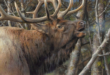 """Carl Brenders  Hand Signed and Numbered Limited Edition Print and Canvas Giclee: """"Mating Call - Bull Elk"""""""