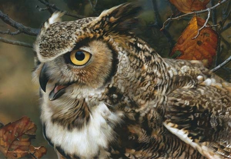 """Carl Brenders Hand Signed and Numbered Limited Edition Print:""""Infocus – Great Horned Owl"""""""