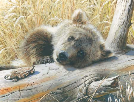 """Carl Brenders Hand Signed and Numbered Limited Edition: """"Time Out -Grizzly Cub"""""""