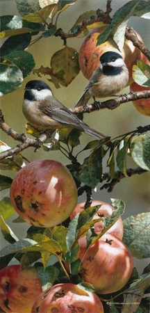 """Carl Brenders Handsigned and Numbered Limited Edition Print:""""Chickadees and Apple Tree"""""""