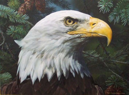 """Carl Brenders Handsigned and Numbered Limited Edition Print: """"Fir and Feathers"""""""