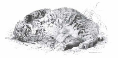 """Carl Brenders Handsigned and Numbered Limited Edition Print :""""Wild Thing - Bobcat"""""""