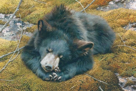 "Carl Brenders Handsigned & Numbered Limited Edition Print:""Bearly Asleep"""