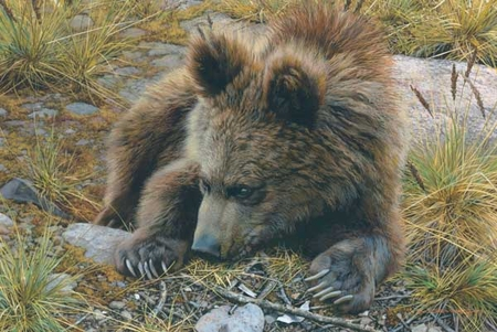 """Carl Brenders Handsigned & Numbered Limited Edition Print:""""Bearly Awake"""""""