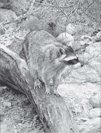 """Carl Brenders Handsigned & Numbered Limited Edition Print:""""Racoon Study"""""""