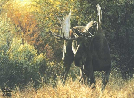 """Carl Brenders Handsigned & Numbered Limited Edition Print:""""Sudden Encounter-Bull Moose """""""