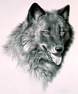 "Carl Brenders Limited Edition Print:""Black Wolf"""