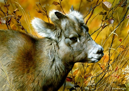 """Carl Brenders Limited Edition Print: """"Mountain Baby - Bighorn Sheep"""""""