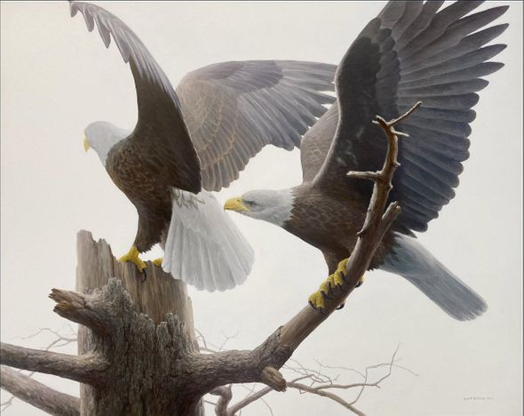 "Robert Bateman Artist Signed Limited Edition Canvas Giclee:"" Landings - Bald Eagle"""
