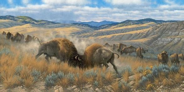 "Michael Sieve Hand Signed and Numbered Limited Edition Canvas Giclee:""High Plains Battle—Bison"""