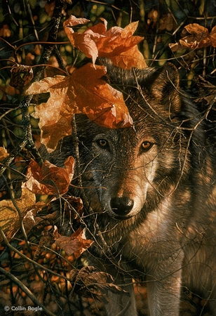 """Collin Bogle Handsigned and Numbered Limited Edition :""""Autumn Eyes"""""""