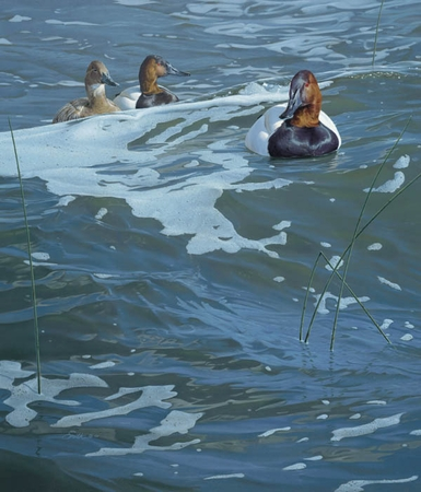 """Daniel Smith Handsigned and Numbered Limted Edition Print:""""On the Rise - Canvasbacks"""""""