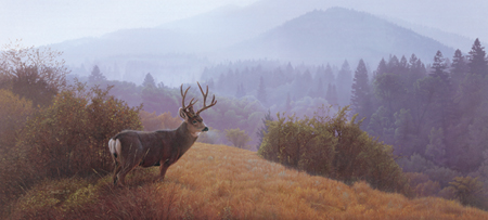 """Daniel Smith Handsigned & Numbered Limited Edition :"""" Autumn Haze-Mule Deer"""""""