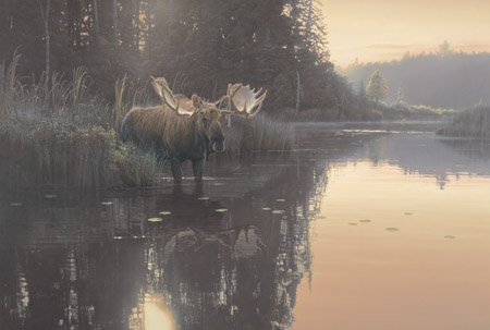 "Daniel Smith Limited Edition SN Print:""Backwater Bull"""