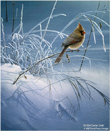"""Daniel Smith Limited Edition Print:""""Snow Song"""""""