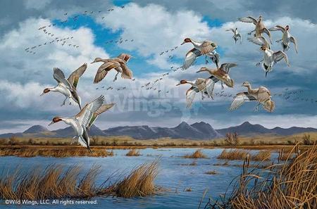 "David A. Maass Hand Signed and Numbered Limited Edition Artist Proof Print: ""Waterfowling Hot Spots-Pintails"""