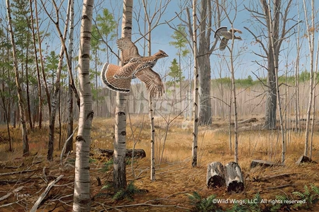 """David A. Maass Handsigned and Numbered Limited Edition Print:""""Grouse Meadow-Ruffed Grouse"""""""