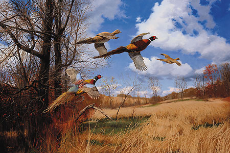 "David A. Maass Signed and Numbered Limited Edition Artist Proof Print: ""Tomahawk Trail-Pheasant """
