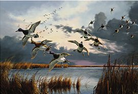 "David Maas Limited Edition Print: ""After the Squall - Bluebill"""