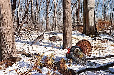 "David Maas Limited Edition Print: ""Early Spring - Wild Turkeys"""