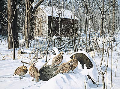 "David Maas Limited Edition Print: ""Winter Shelter - Bob White"""