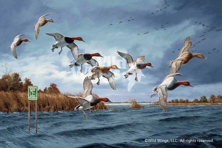 """David Maass Limited Edition Artist Proof Print:""""Fruits of Your Labor - Canvasbacks"""""""