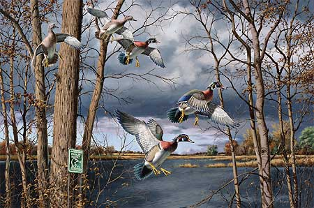 "David Maass Limited Edition Artist Proof Print:""Fruits of Your Labor - Wood Duck """