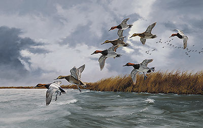 "David Maass Limited Edition Print:""Silver Bullets - Canvasbacks"""