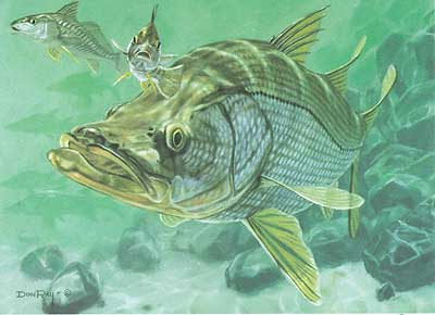 "Don Ray Handsigned and Numbered Limited Edition Print: ""Inlet Snook & Croakers"""