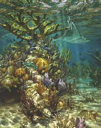 """Don Ray Handsigned and Numbered Limited Edition Print: """"Ray's Reef"""""""