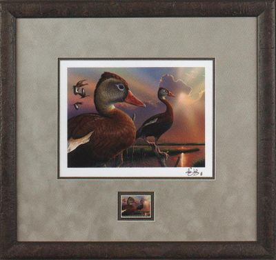 """Federal Duck Stamp Framed Print COLLECTOR'S Limited Edition by Eddie LeRoy:""""Black-Bellied Whistling-Duck"""""""