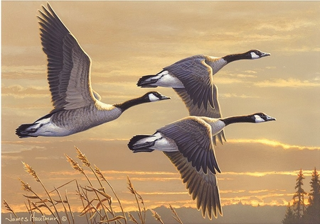 """Federal Duck Stamp Print 2017-18  Artist Proof Limited Edition by James Hautman:""""Geese at Sunset"""""""