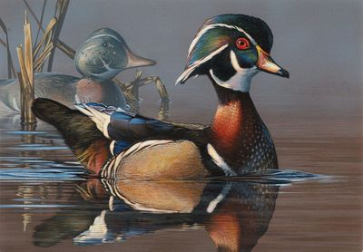 "Federal Duck Stamp Print COLLECTOR'S EDITION 2019-20 Limited Edition by Scot Storm:""Wood Duck and Decoy"""