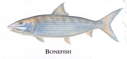 """Flick Ford Artist Handsigned Open Edition Giclee Print on Paper :""""Bonefish"""""""