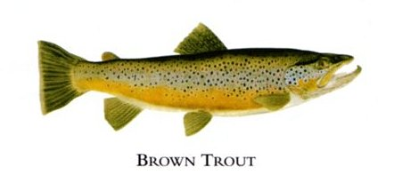 """Flick Ford Artist Handsigned Open Edition Giclee Print on Paper :""""Brown Trout """""""